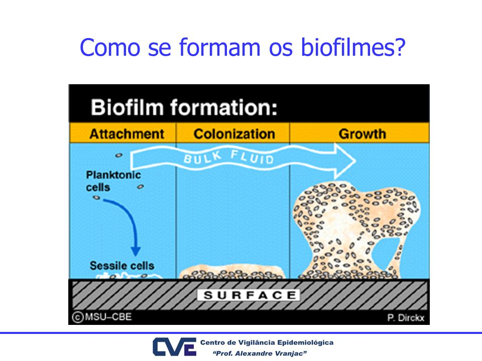 Biofilmes e Doença Humana Dente: –Placa bacteriana Pulmão –Fibrose Cística Vias urinárias: –Prostatite Costerton et al.