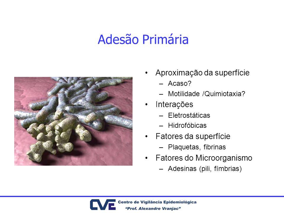 Adesão Primária Aproximação da superfície –Acaso? –Motilidade /Quimiotaxia? Interações –Eletrostáticas –Hidrofóbicas Fatores da superfície –Plaquetas,