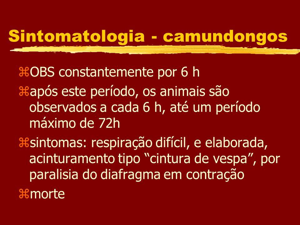 Sintomatologia - camundongos zOBS constantemente por 6 h zapós este período, os animais são observados a cada 6 h, até um período máximo de 72h zsinto