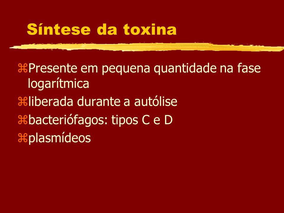 Síntese da toxina zPresente em pequena quantidade na fase logarítmica zliberada durante a autólise zbacteriófagos: tipos C e D zplasmídeos