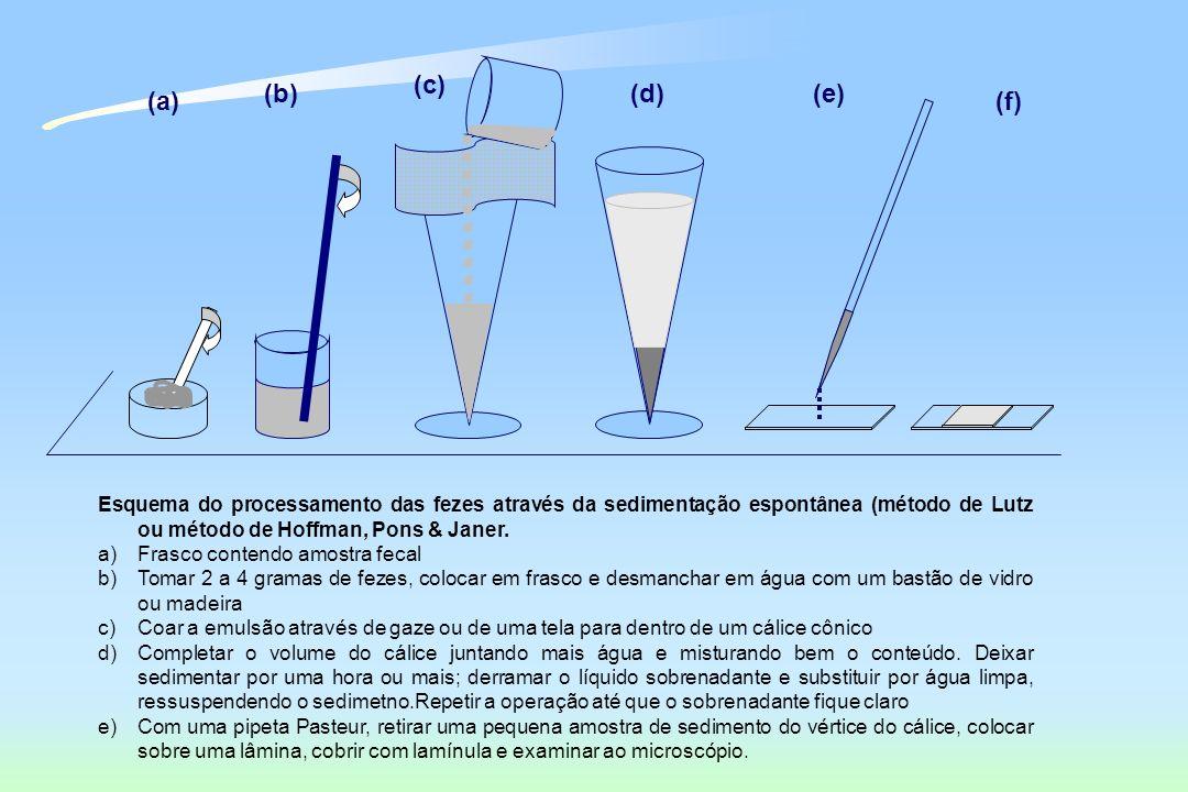 Esquema do processamento das fezes através da sedimentação espontânea (método de Lutz ou método de Hoffman, Pons & Janer. a)Frasco contendo amostra fe