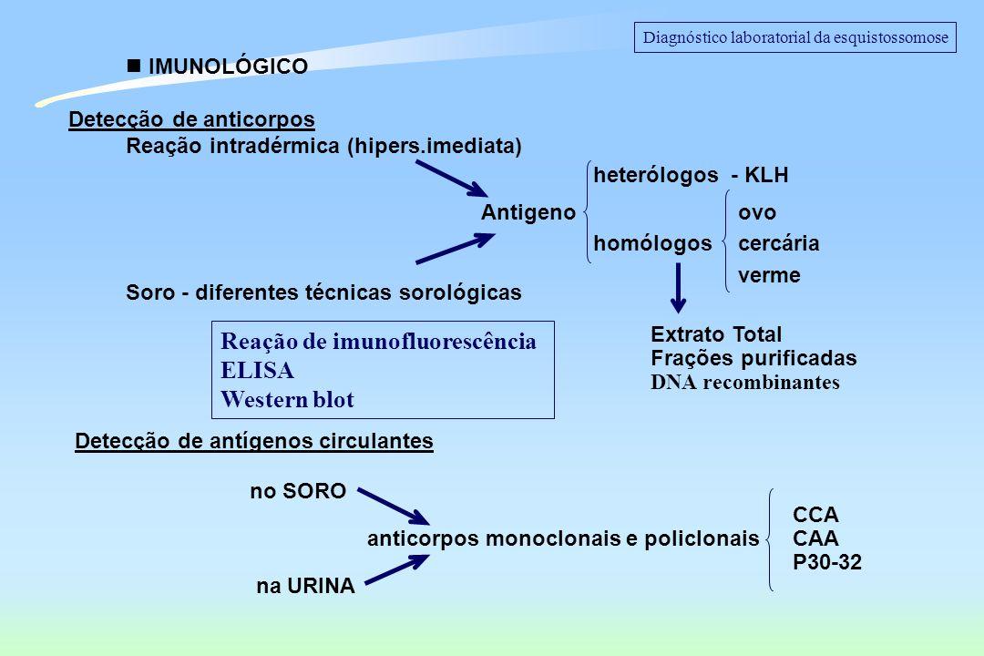 -Diferenciar infecção aguda da crônica -Verificar cura parasitológica -Diferenciar infecção ativa da passada -Inquéritos epidemiológicos -Programa de Vigilância Epidemiológica ALGUMAS APLICAÇÕES IMPORTANTES PARA OS MÉTODOS SOROLÓGICOS Diagnóstico laboratorial da esquistossomose