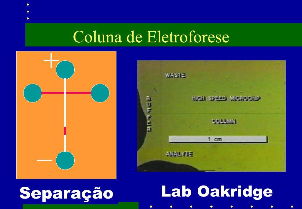 Coluna de Eletroforese Injeção Separação Lab Oakridge