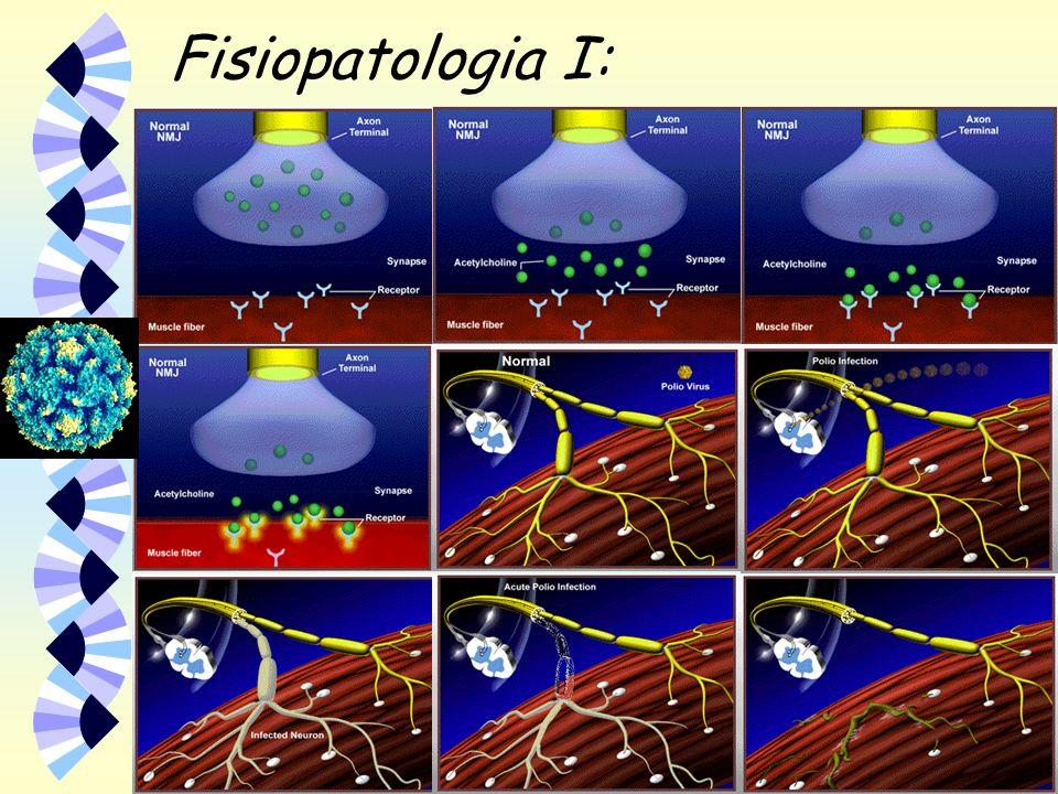 Fisiopatologia I: