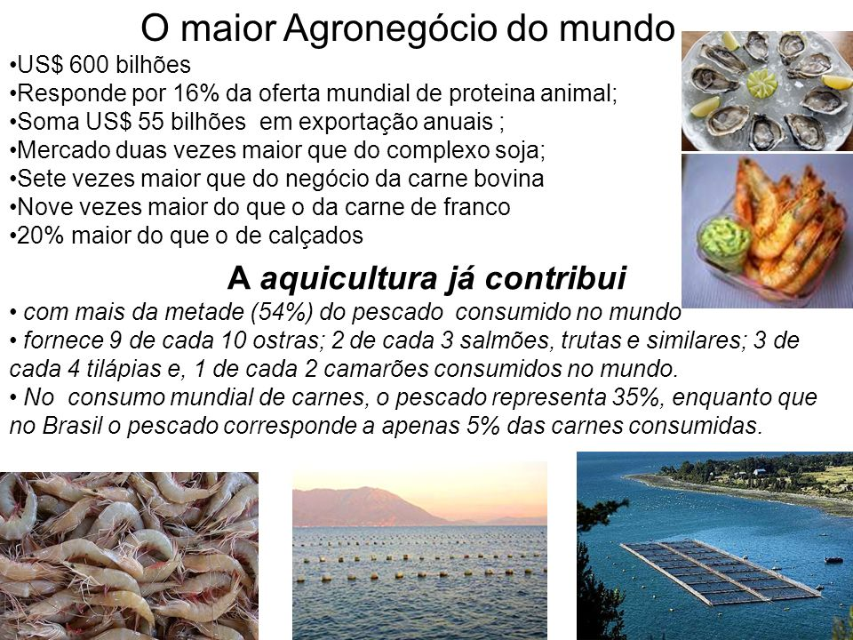 O maior Agronegócio do mundo US$ 600 bilhões Responde por 16% da oferta mundial de proteina animal; Soma US$ 55 bilhões em exportação anuais ; Mercado