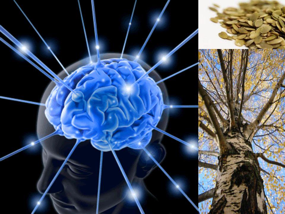 De acordo com sua predisposição mental, os seres humanos podem ser classificados nas quatro categorias seguintes: Homem Divino Brahman Nishta Ratho Devah Homem Humano Sathya Dharma Ratho Marthyaha Homem Demoníaco Madhyapana Ratho Danavaha Homem animalesco