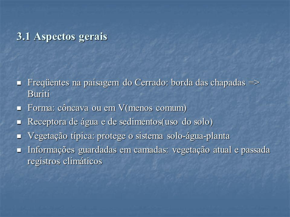 3.1 Aspectos gerais Freqüentes na paisagem do Cerrado: borda das chapadas => Buriti Freqüentes na paisagem do Cerrado: borda das chapadas => Buriti Fo
