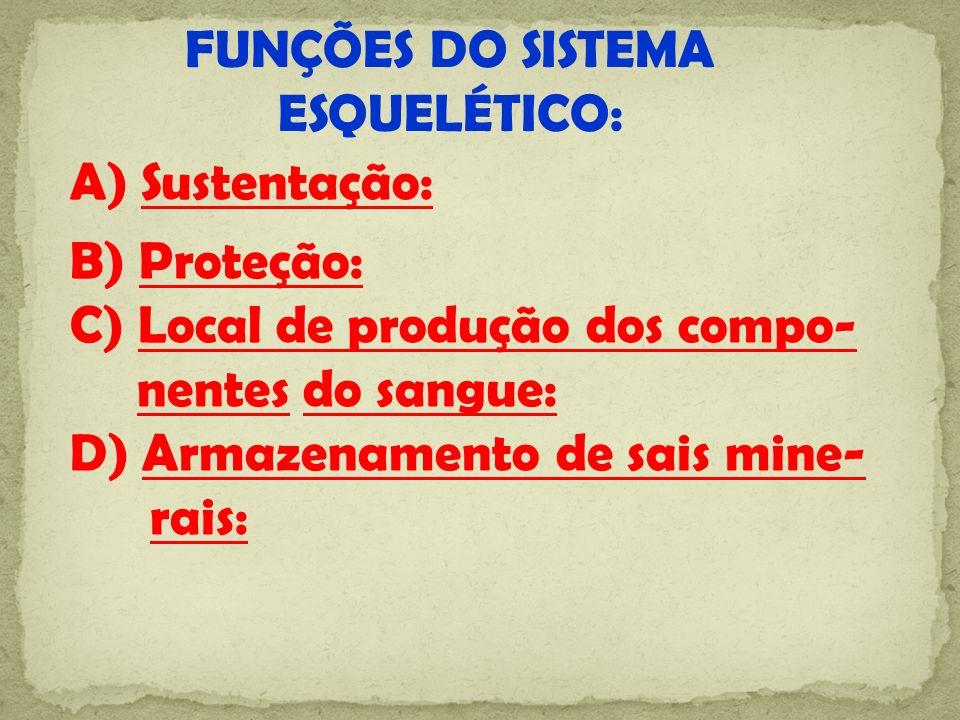 FUNÇÕES DO SISTEMA ESQUELÉTICO: A) Sustentação: B) Proteção: C) Local de produção dos compo- nentes do sangue: D) Armazenamento de sais mine- rais: