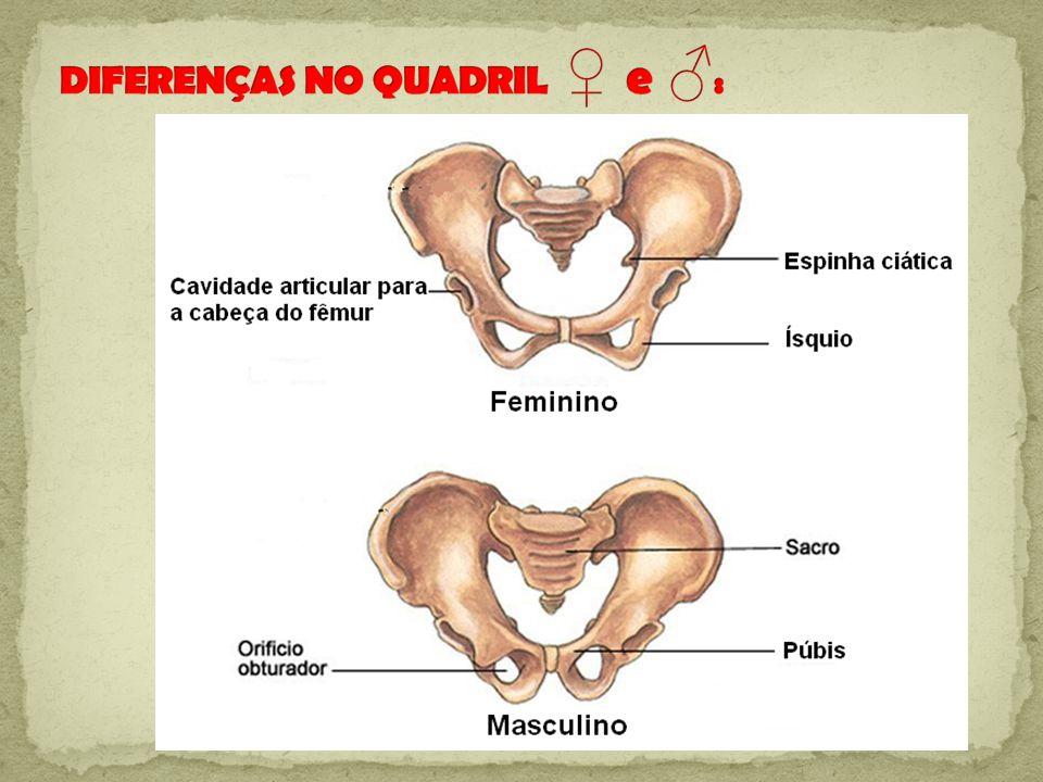 Tema Sistema Esquelético: Caracterizar e exemplificar os quatro tipos de ossos de nosso corpo.