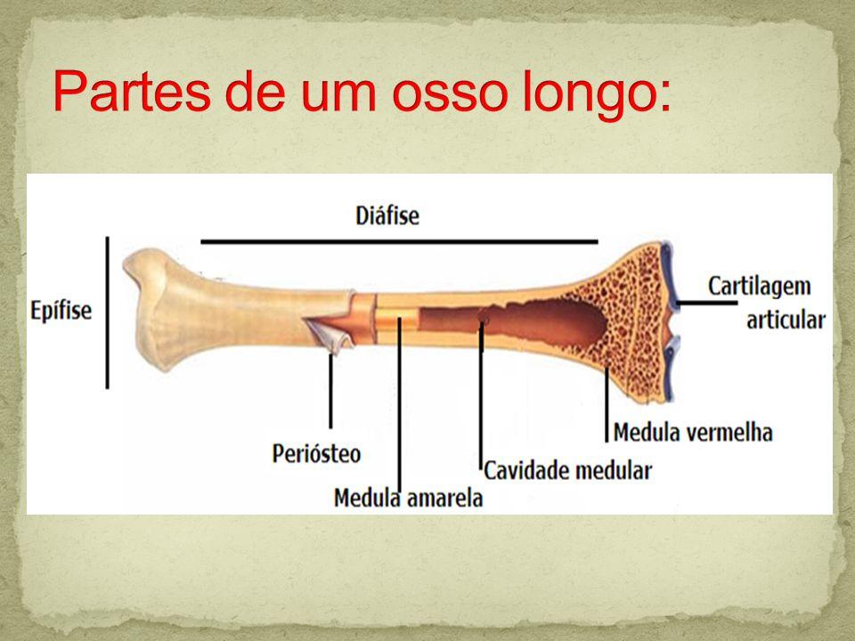 Tipos de ossos: - Longos: - Curtos: - Planos: - Irregulares:
