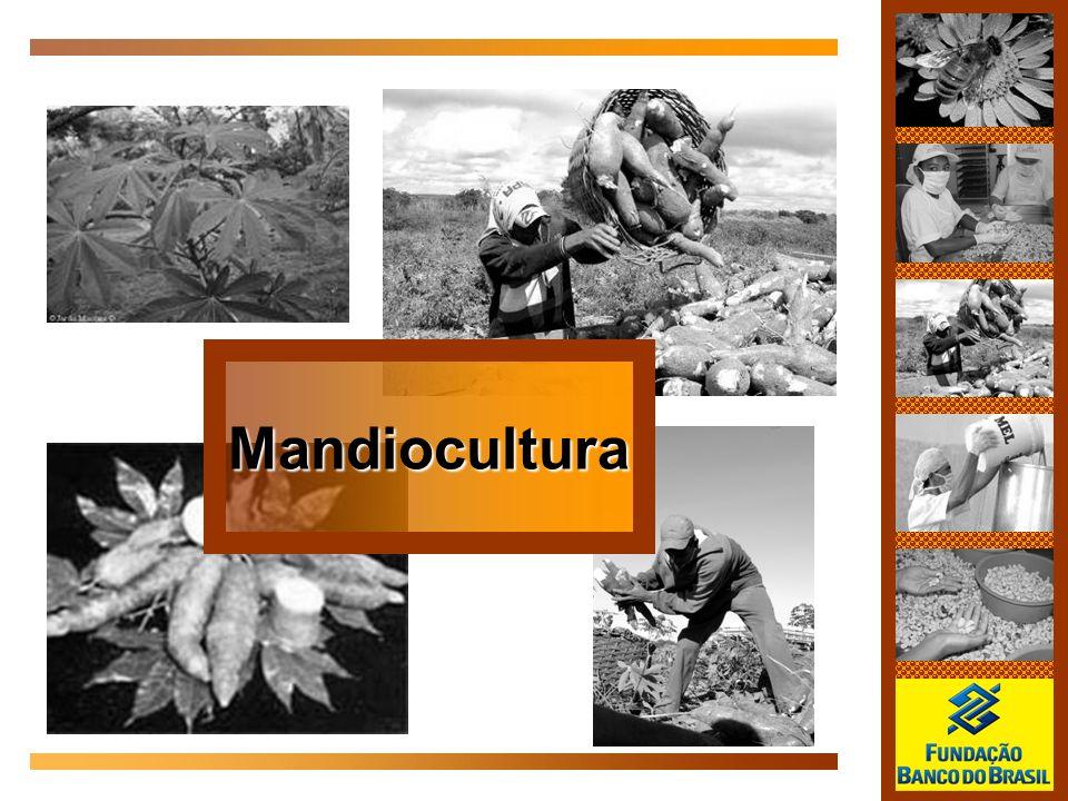 Mandiocultura