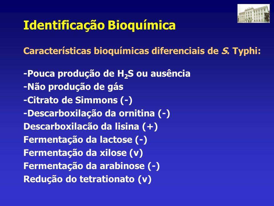 Identificação Bioquímica Características bioquímicas diferenciais de S. Typhi: -Pouca produção de H 2 S ou ausência -Não produção de gás -Citrato de S