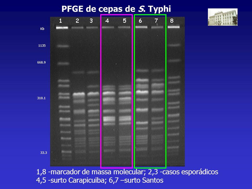 PFGE de cepas de S. Typhi 1,8 -marcador de massa molecular; 2,3 -casos esporádicos 4,5 -surto Carapicuiba; 6,7 –surto Santos 1135 668.9 310.1 33.3 Kb