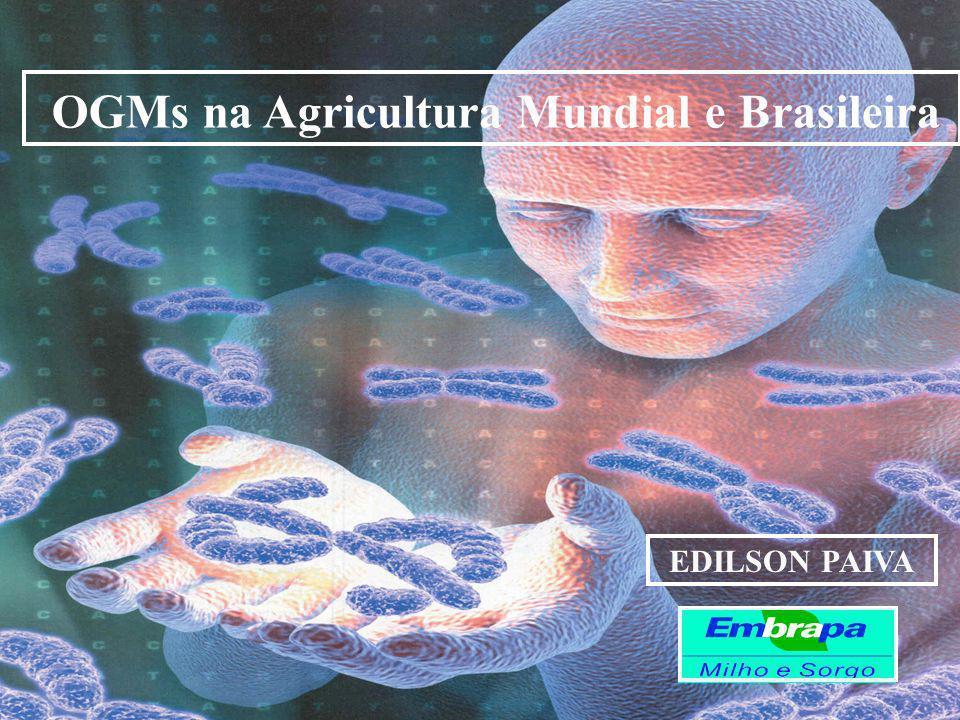 OGMs na Agricultura Mundial e Brasileira EDILSON PAIVA
