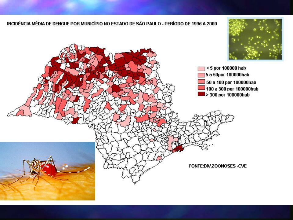 DENGUE HEMORRÁGICO n 1999 1 –RIOLÂNDIA n 2000 2 –BARRETOS –CAMPINAS n 2001 3 –BARRETOS –GUAÍRA –JARDINÓPOLIS