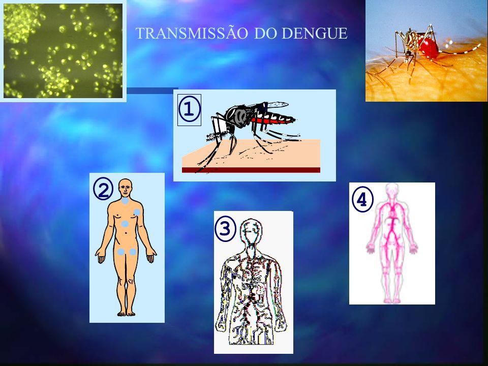 1 2 3 4 TRANSMISSÃO DO DENGUE