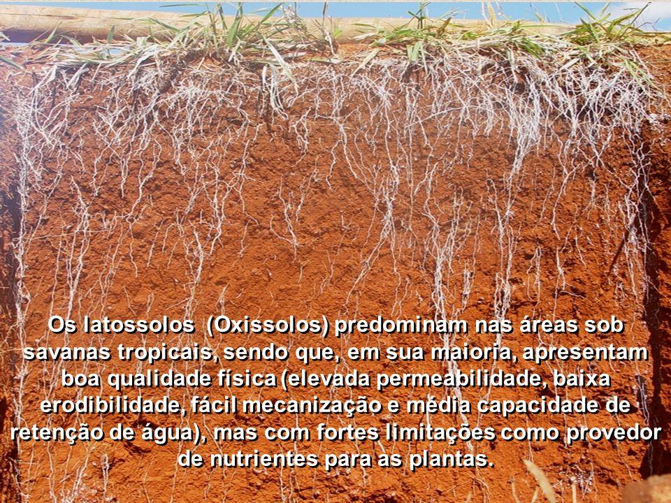 Os latossolos (Oxissolos) predominam nas áreas sob savanas tropicais, sendo que, em sua maioria, apresentam boa qualidade física (elevada permeabilida