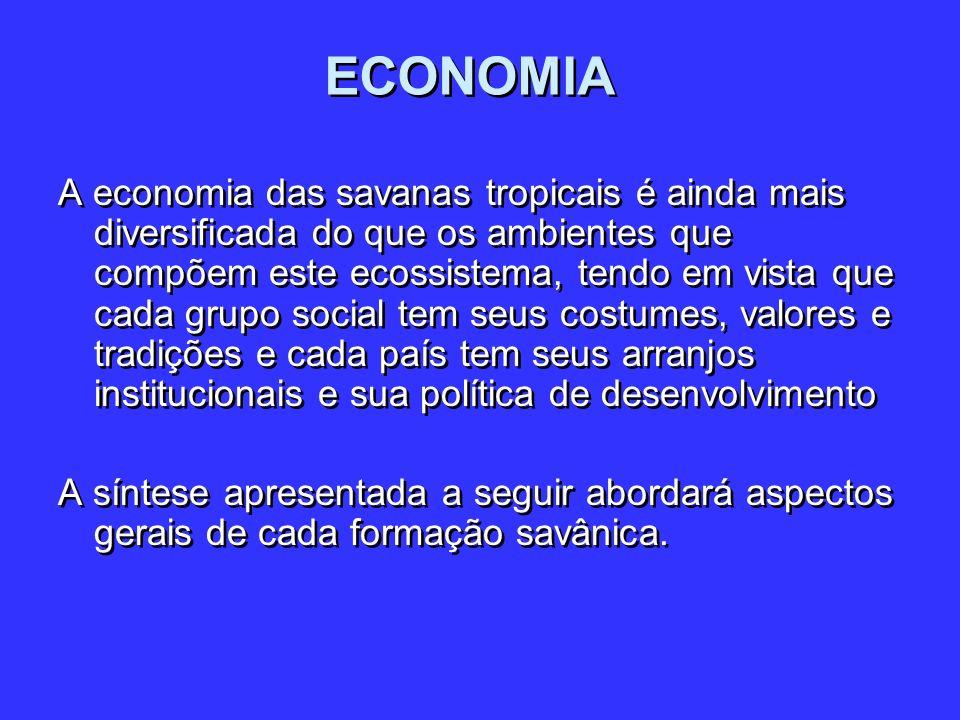 ECONOMIA A economia das savanas tropicais é ainda mais diversificada do que os ambientes que compõem este ecossistema, tendo em vista que cada grupo s