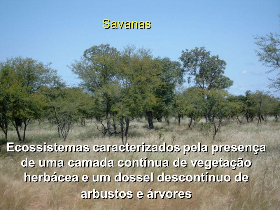 Savanas da Austrália Longos períodos de seca, mas com inundações no período chuvoso, dificultam o uso intensivo.