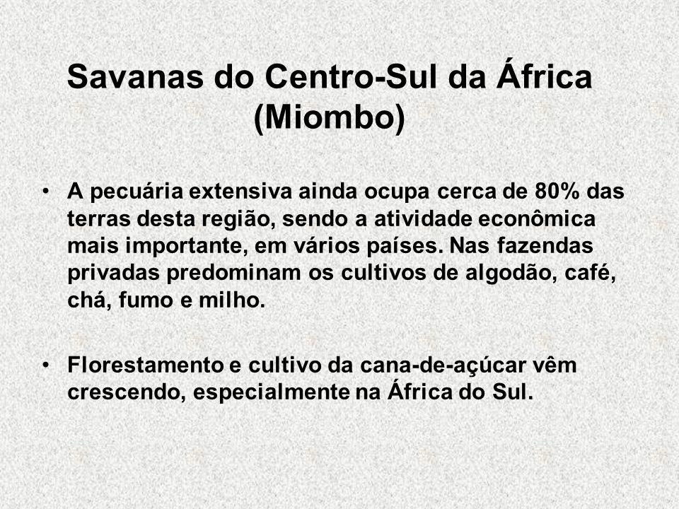 Savanas do Centro-Sul da África (Miombo) A pecuária extensiva ainda ocupa cerca de 80% das terras desta região, sendo a atividade econômica mais impor