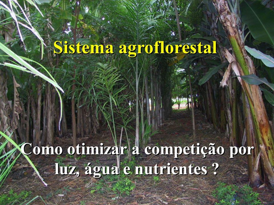 Sistema agroflorestal Como otimizar a competição por luz, água e nutrientes ?