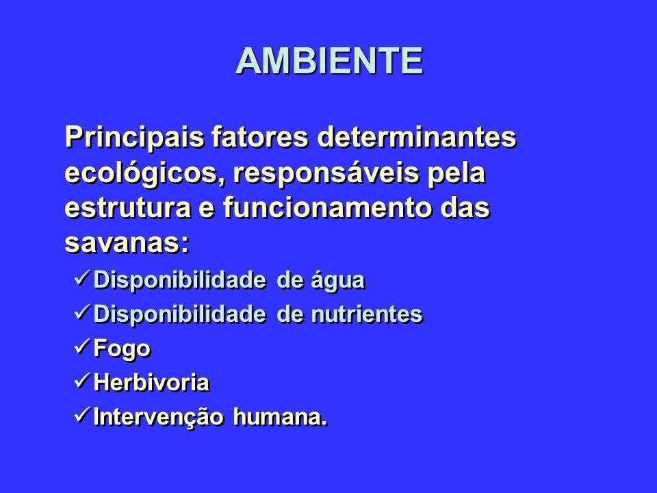 AMBIENTE Principais fatores determinantes ecológicos, responsáveis pela estrutura e funcionamento das savanas: Disponibilidade de água Disponibilidade