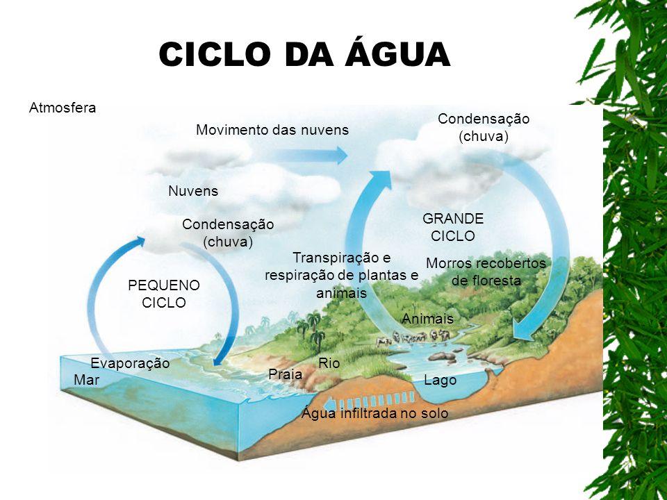Água infiltrada no solo GRANDE CICLO Transpiração e respiração de plantas e animais Atmosfera Evaporação Mar Praia Rio Lago Animais PEQUENO CICLO Cond