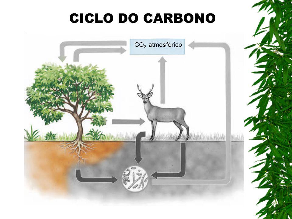 CO 2 atmosférico CICLO DO CARBONO