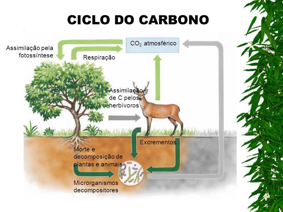CO 2 atmosférico Assimilação pela fotossíntese Respiração Microrganismos decompositores Morte e decomposição de plantas e animais Excrementos Assimila