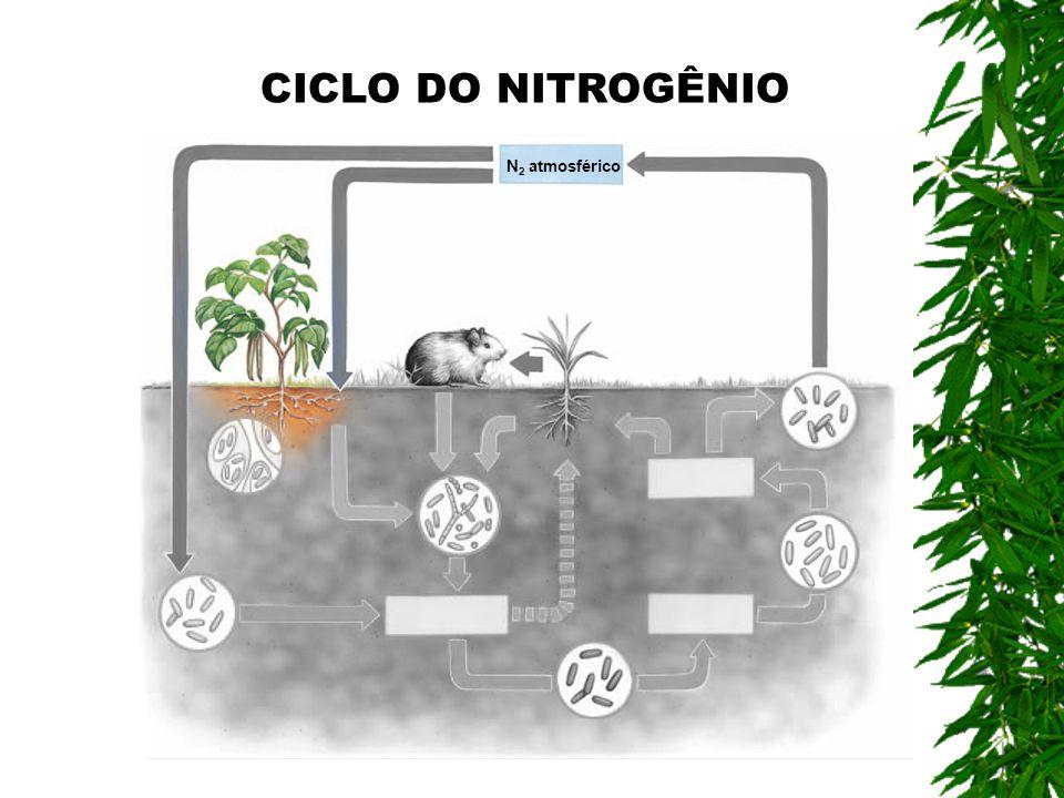N 2 atmosférico CICLO DO NITROGÊNIO
