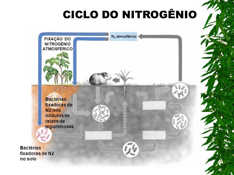 FIXAÇÃO DO NITROGÊNIO ATMOSFÉRICO Bactérias fixadoras de N2 nos nódulos de raízes de leguminosas Bactérias fixadoras de N2 no solo N 2 atmosférico CIC