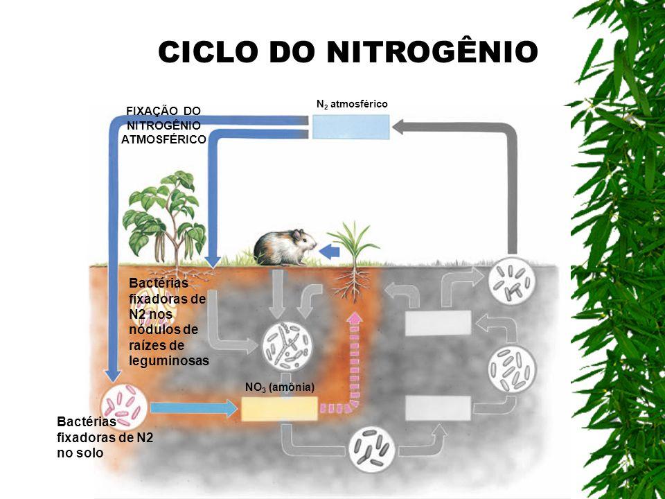 FIXAÇÃO DO NITROGÊNIO ATMOSFÉRICO Bactérias fixadoras de N2 nos nódulos de raízes de leguminosas Bactérias fixadoras de N2 no solo NO 3 (amônia) N 2 a