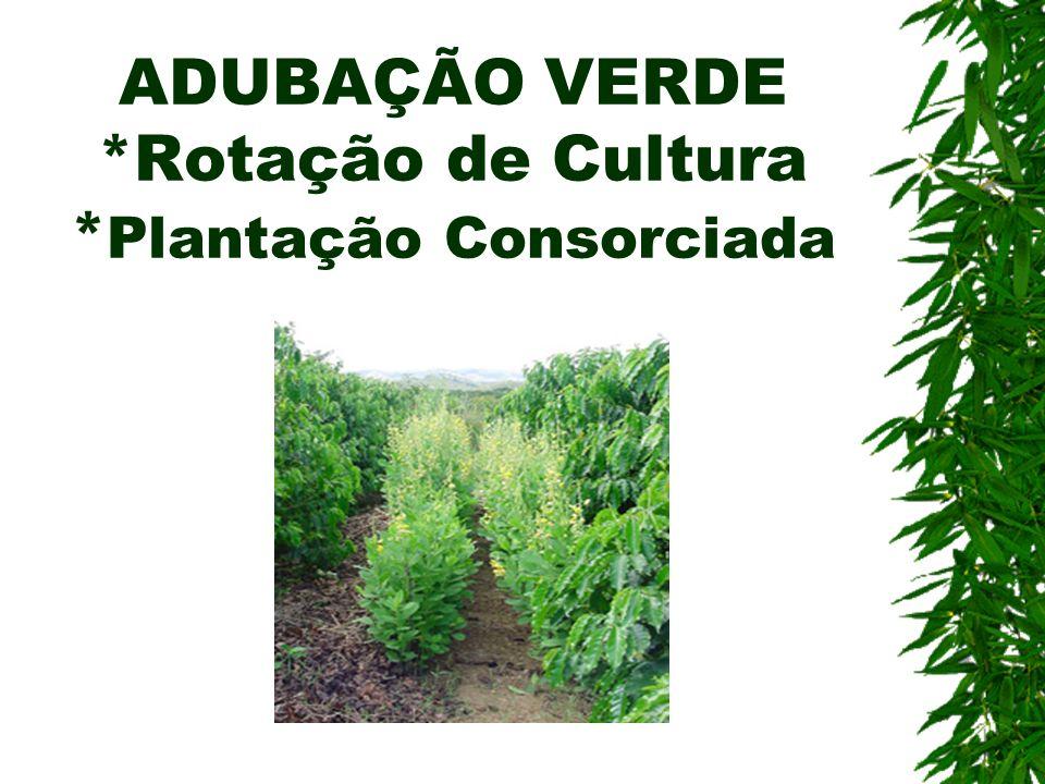 ADUBAÇÃO VERDE *Rotação de Cultura * Plantação Consorciada