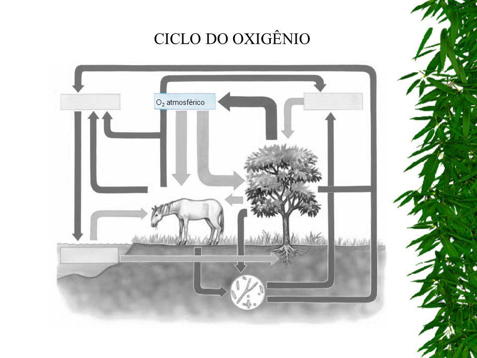 O 2 atmosférico CICLO DO OXIGÊNIO
