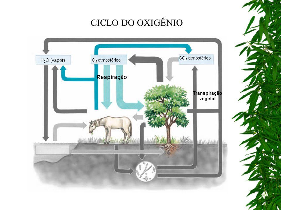 Respiração CO 2 atmosférico H 2 O (vapor) Transpiração vegetal O 2 atmosférico CICLO DO OXIGÊNIO