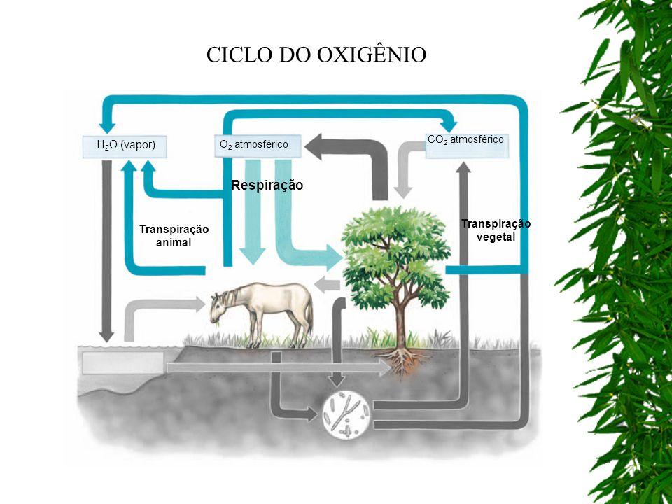 Respiração Transpiração vegetal Transpiração animal CO 2 atmosférico O 2 atmosférico H 2 O (vapor) CICLO DO OXIGÊNIO
