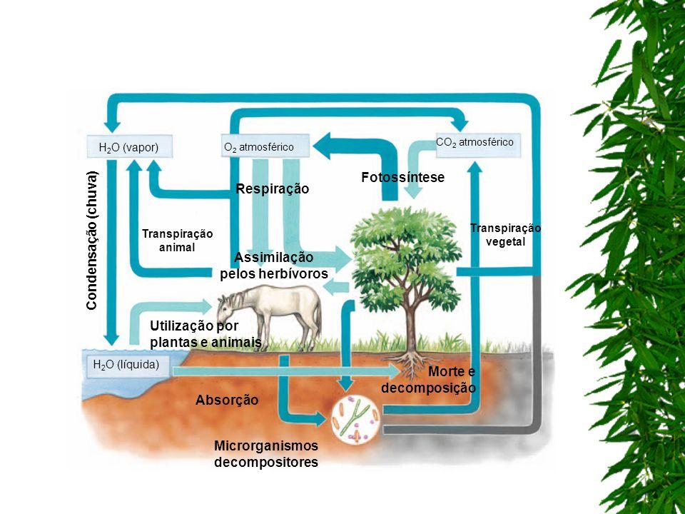 Respiração H 2 O (vapor) Transpiração vegetal Transpiração animal Fotossíntese H 2 O (líquida) Absorção Utilização por plantas e animais Assimilação p