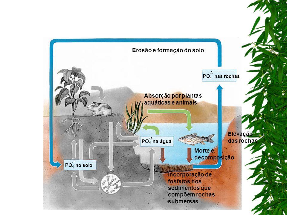 Erosão e formação do solo Incorporação de fosfatos nos sedimentos que compõem rochas submersas Elevação das rochas PO 4 no solo -3 Absorção por planta