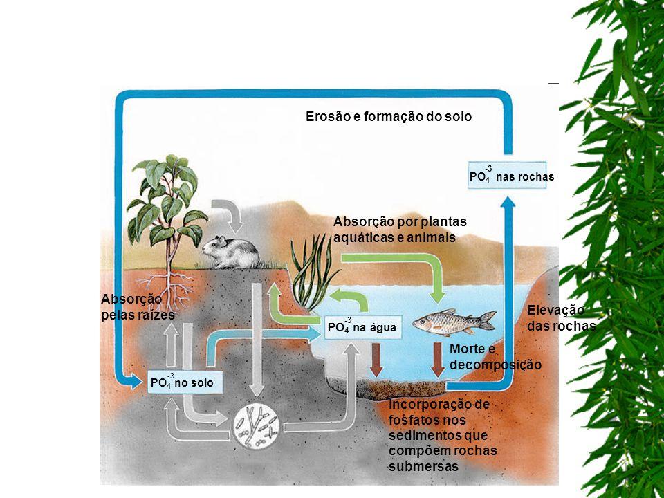 Erosão e formação do solo Incorporação de fosfatos nos sedimentos que compõem rochas submersas Absorção por plantas aquáticas e animais Morte e decomp
