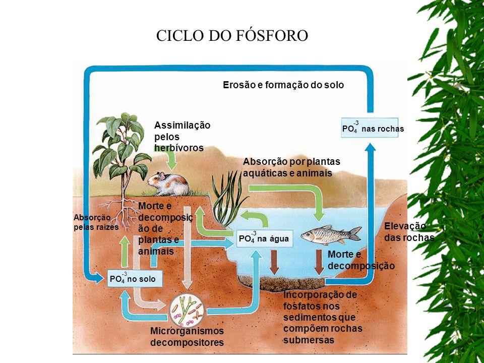 Absorção pelas raízes Erosão e formação do solo Incorporação de fosfatos nos sedimentos que compõem rochas submersas Assimilação pelos herbívoros Micr
