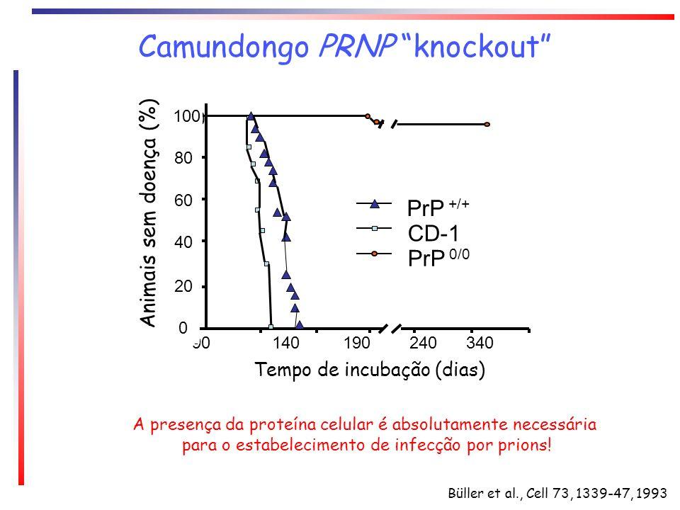Camundongo PRNP knockout Büller et al., Cell 73, 1339-47, 1993 A presença da proteína celular é absolutamente necessária para o estabelecimento de inf