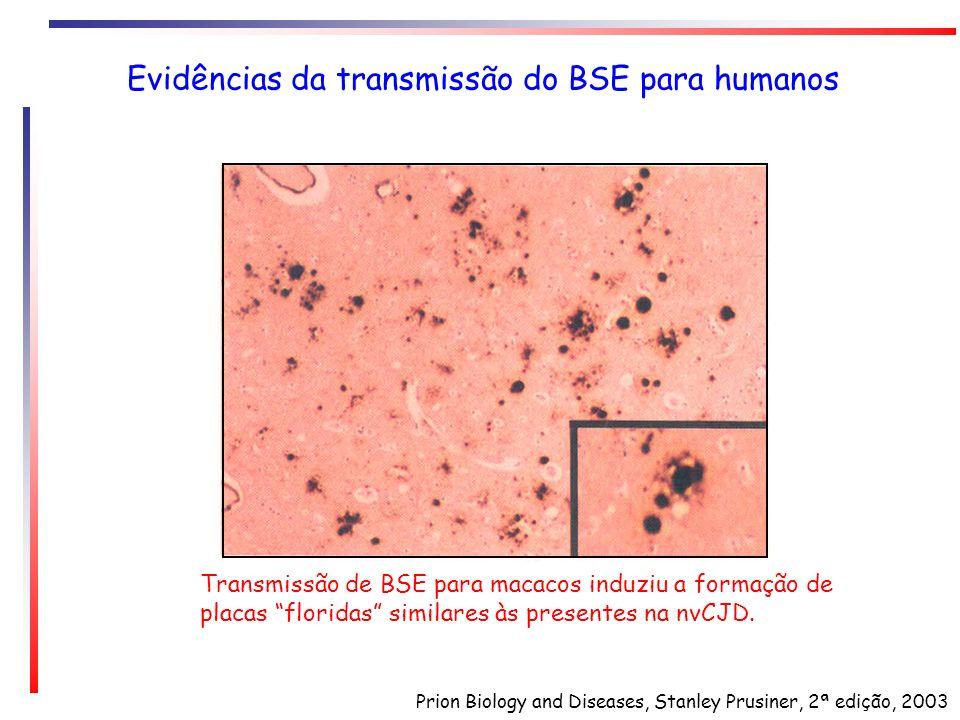 Evidências da transmissão do BSE para humanos Transmissão de BSE para macacos induziu a formação de placas floridas similares às presentes na nvCJD. P