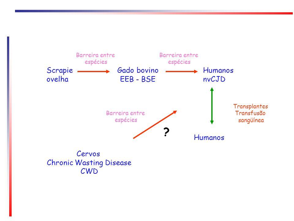Gado bovino EEB - BSE Humanos nvCJD Scrapie ovelha Humanos Cervos Chronic Wasting Disease CWD Barreira entre espécies Transplantes Transfusão sangüíne