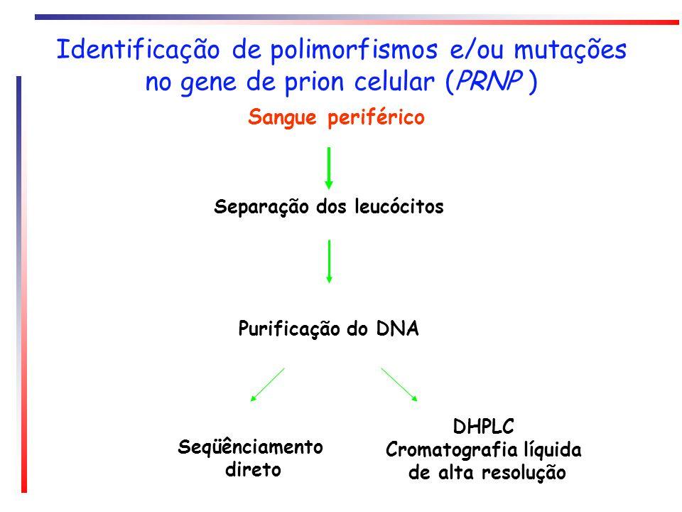 Identificação de polimorfismos e/ou mutações no gene de prion celular (PRNP ) Sangue periférico Separação dos leucócitos Purificação do DNA Seqüênciam