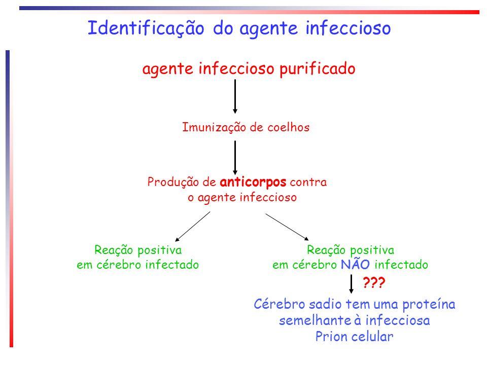 Identificação do agente infeccioso agente infeccioso purificado Imunização de coelhos Produção de anticorpos contra o agente infeccioso Reação positiv