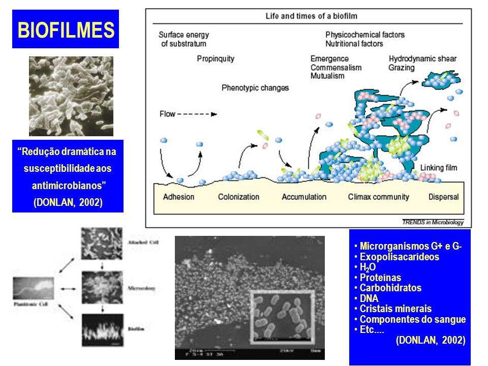 Microrganismos G+ e G- Exopolisacarídeos H 2 O Proteínas Carbohidratos DNA Cristais minerais Componentes do sangue Etc.... (DONLAN, 2002) Redução dram