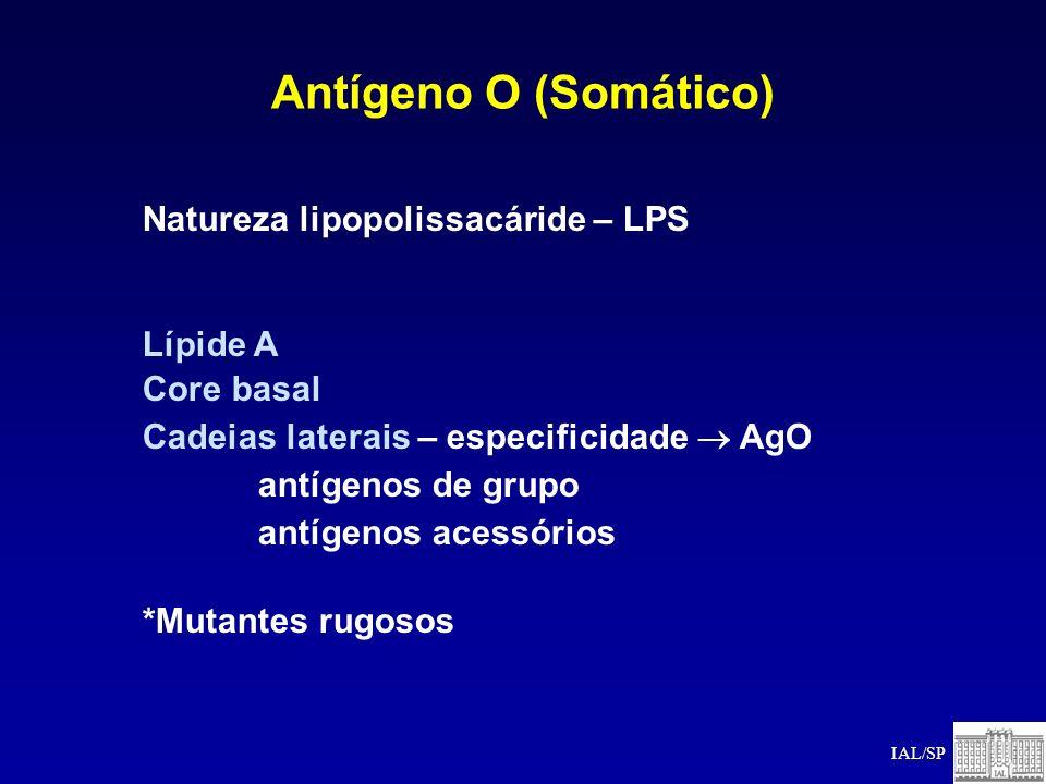 Antígeno O (Somático) Natureza lipopolissacáride – LPS Lípide A Core basal Cadeias laterais – especificidade AgO antígenos de grupo antígenos acessóri