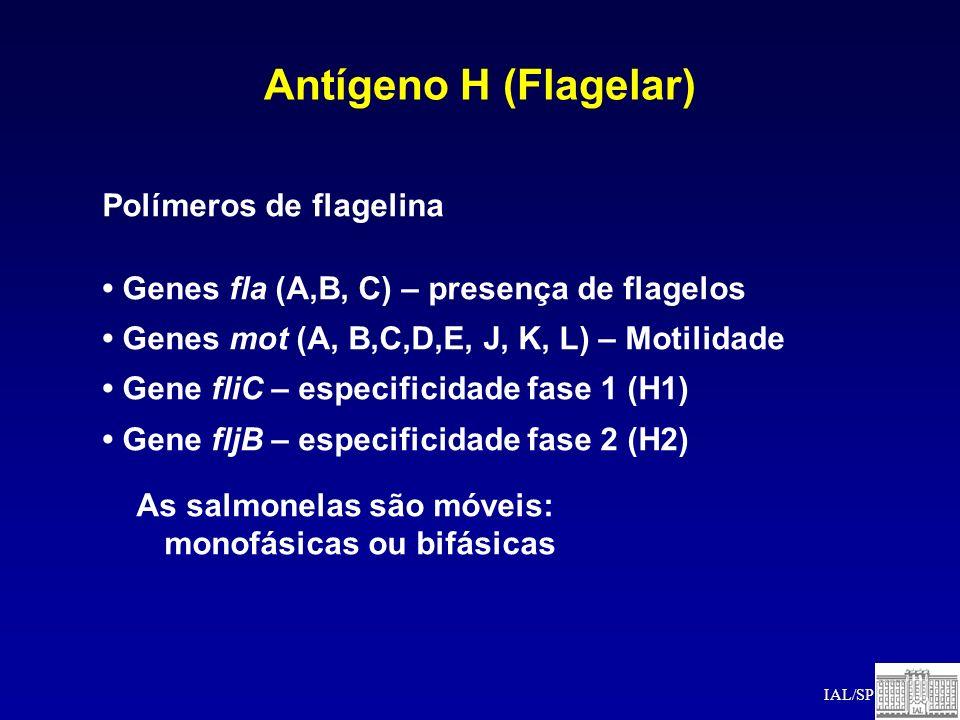 Antígeno H (Flagelar) Polímeros de flagelina Genes fla (A,B, C) – presença de flagelos Genes mot (A, B,C,D,E, J, K, L) – Motilidade Gene fliC – especi