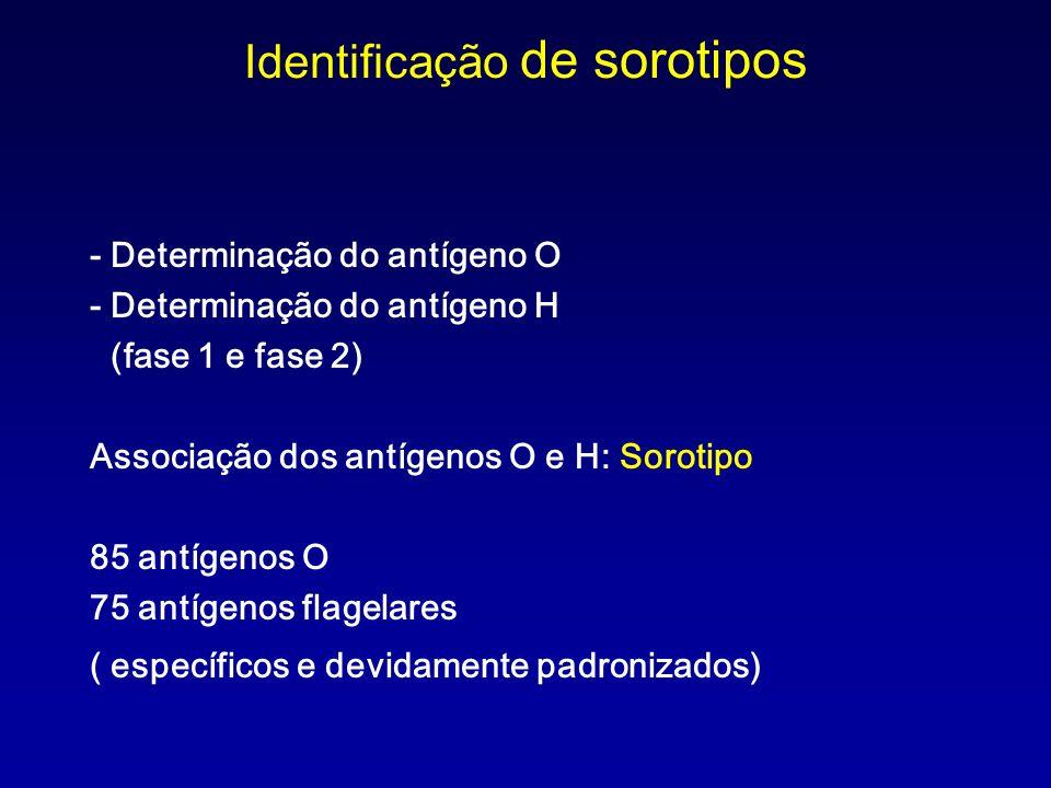 Identificação de sorotipos - Determinação do antígeno O - Determinação do antígeno H (fase 1 e fase 2) Associação dos antígenos O e H: Sorotipo 85 ant