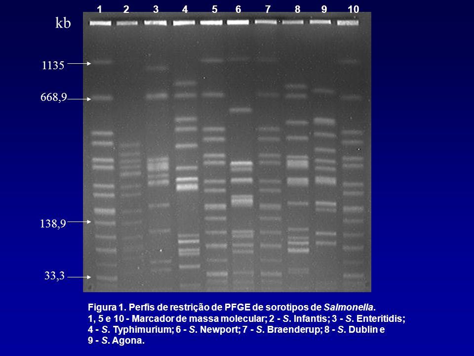 1 2 3 4 5 6 7 8 9 10 Figura 1. Perfis de restrição de PFGE de sorotipos de Salmonella. 1, 5 e 10 - Marcador de massa molecular; 2 - S. Infantis; 3 - S